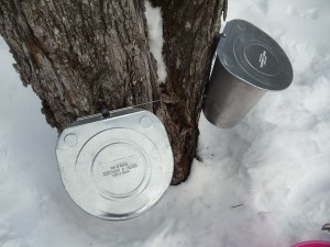 Sugarbush pails Photo by JP Campbell