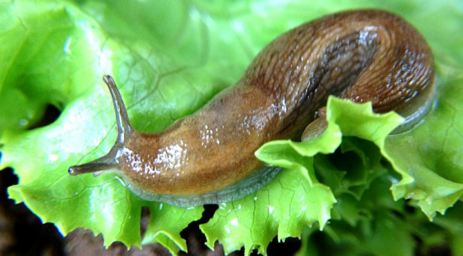 Three ways to deal with slugs