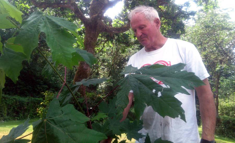 Larry Fiege of Fiege's Farm BC Big Leaf Maple Syrup
